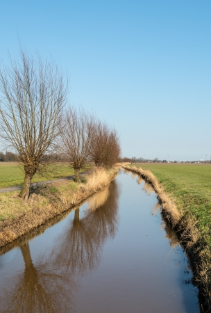 A meandering ditch and a row of bare pollard willows along the waterfront  photo