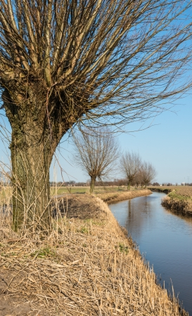 A meandering ditch and a row of bare pollard willows along the waterfront Stock Photo - 18278607