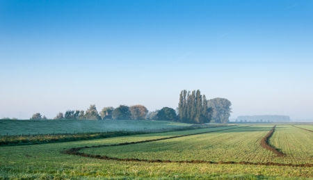 dike: Landscape in the Netherlands with early morning mist and low sunlight.