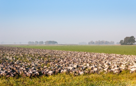 Dutch organic agriculture fields early in the morning. photo