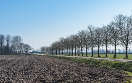 polder: Rows of bare trees in a Dutch polder landscape. Stock Photo