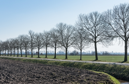 Row of bare trees in a Dutch polder landscape. photo