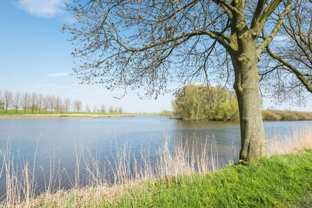 Small natural pond in the spring season with budding trees and yellowed reeds  photo