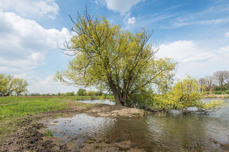 noteworthy: Irregularly shaped tree  in springtime in a nature reserve in the Netherlands. Stock Photo