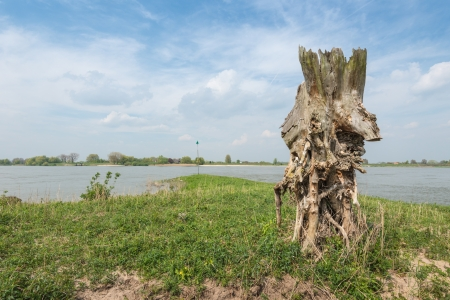 noteworthy: Bizarrely shaped and weathered tree stump on the bank of a Dutch river. Stock Photo