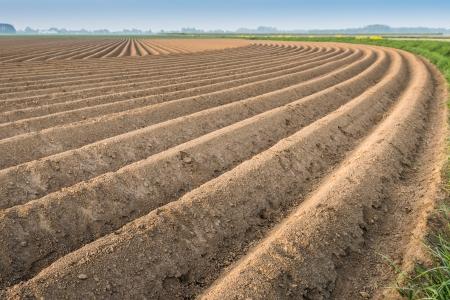 Gebogen ruggen van de grond na het planten van aardappelen in de Nederlandse landbouwgronden