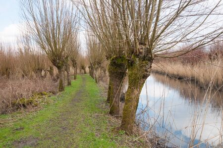 pollard willows: Countryside with a reflecting stream and bare pollard willows.