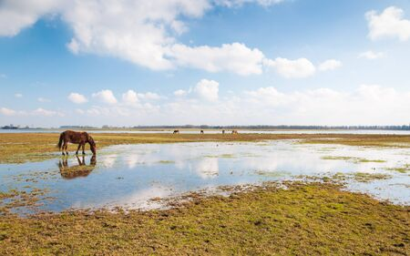 caballo bebe: Caballo de consumición refleja en un espejo sutface aguas tranquilas.