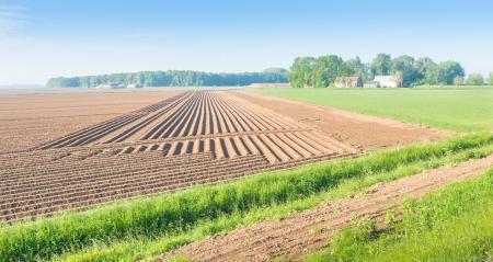 Landschap met een groot veld met ruggen van aarde met geplante aardappelen in verschillende richtingen.
