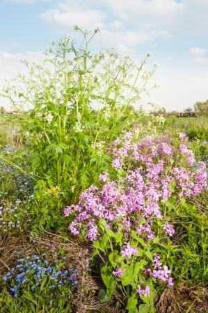 subdivided: Colorful biodiversity in a small field in the Netherlands.