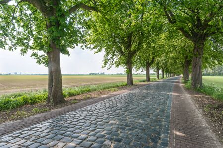 A narrow road paved with cobblestones between trees in a rural Dutch area. photo