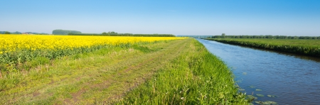napus: Rapeseed field, path, ditch and grassland converging to one point in the distance.