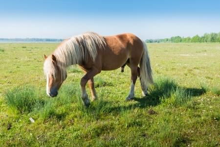 Mannelijk paard lopen op gras en biezen in het voorjaar.