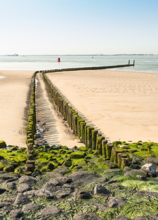 zeeland: Double row of wooden poles covered with seaweed.