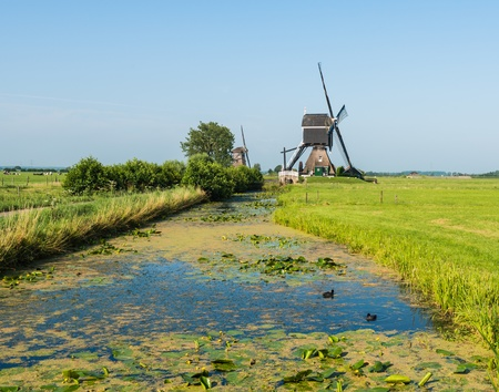 watermanagement: Typical Dutch polderlandscape in summer with windmills, grass and yellow blooming water lilies. Stock Photo