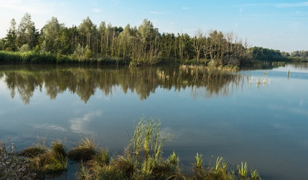 windless: The mirror smooth water surface of a natural pond on a windless day provides perfect reflection of the trees and the reeds. Stock Photo