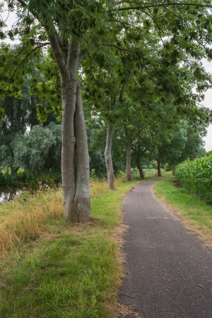 entwined: Narrow path with trees and maize at the edges.