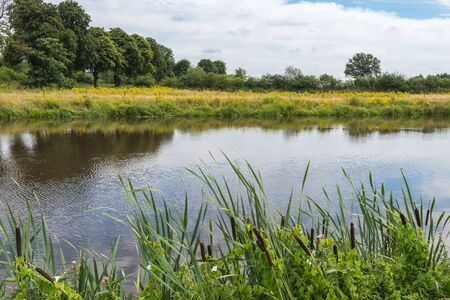 Cattails in the foreground and yellow blooming wildflowers across the river. Stock Photo