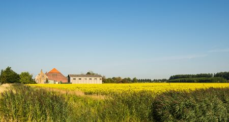 Yellow flowering rapeseed in an agricultural landscape in summer  photo