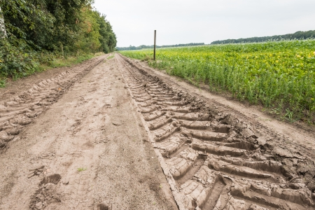 Giant tire tracks in a sand path next to a agricultural field  photo