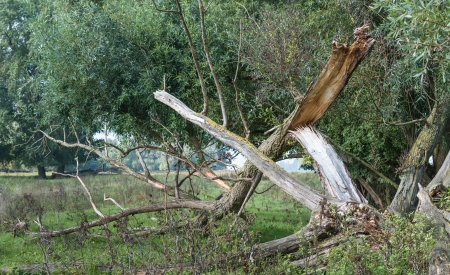 Fallen and broken tree after storm and lightning  photo