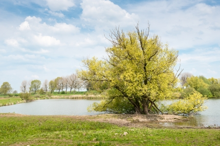 crooked: Small lake with a a large and somewhat crooked tree