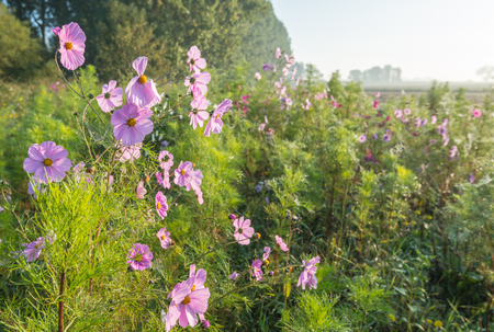 crop margin: Dewy wild flowers bloom in autumn along the outskirts of a field  Stock Photo