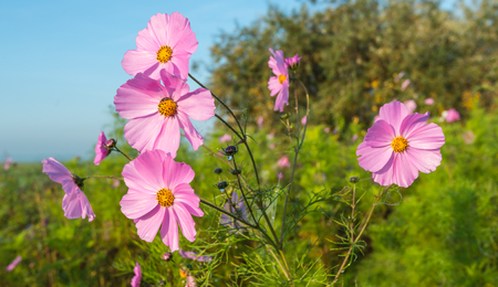 crop margin: Closeup of dewy wild flowers bloom in autumn along the outskirts of a field