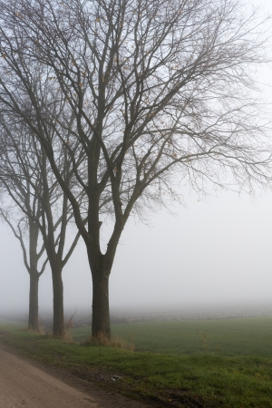 Dutch landscape with bare trees along a country road in a foggy rural area. photo