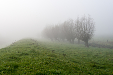 pollard: Grassland and pollard willows next to a dike in a very dense fog early in the morning. Stock Photo