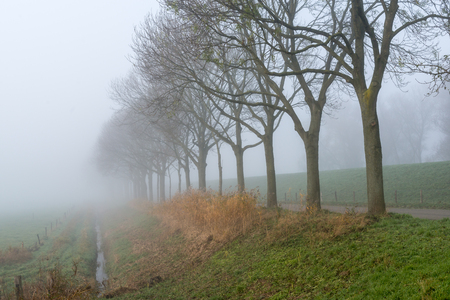 Grassland and bare trees next to a country road and a dike in a very dense autumnal fog. photo