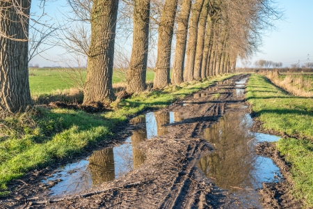 Row of tall trees reflected in the puddles of a muddy country road in a rural landscape  photo