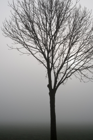 Closeup of a lonely bare tree on a foggy day in the fall season  photo