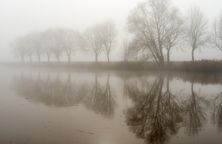 Row of bare trees reflected in the mirror smooth water surface on a foggy day in autumn  photo