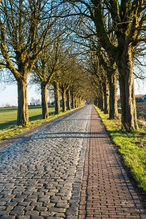 road autumnal: Row of trees beside a cobblestone road in autumnal sunlight. Stock Photo