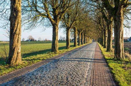 Rij van bomen naast een geplaveide weg in de herfst zonlicht.