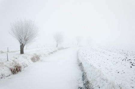 Snowy landscape on a foggy winter day with a frozen ditch and a row of pollard willows with iced branches. Stock Photo