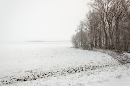 Winter landscape on a foggy day with a row of bare treess and a curved ditch. photo