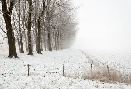 Winter landscape on a foggy day with a row of bare trees and electric fences photo