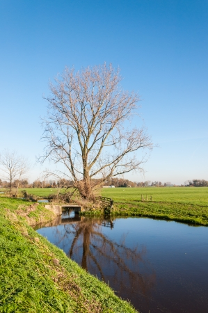 Rural Dutch landscape in autumn with a bare tree reflected in the water surface. photo