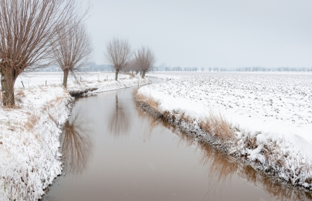 Ditch covered with a thin layer of ice is winding through a snowy agricultural landscape with a row of pollard willows  photo