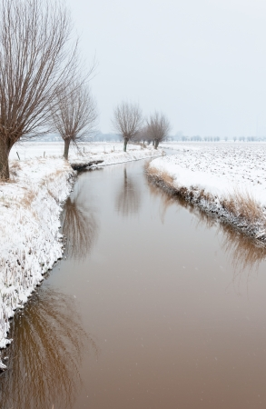 Ditch covered with a thin layer of ice is winding through a snowy agricultural landscape with a row of pollard willows reflected on the ice  photo