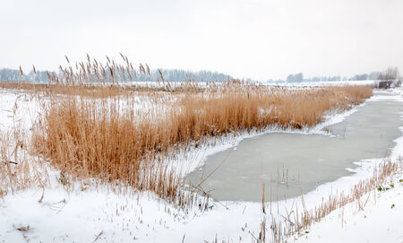 Snowy winter landscape with ice on a ditch and and a golden fringe of reeds along the ditch side. photo