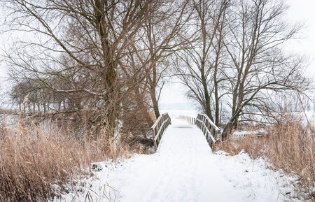 Footpath over a wooden bridge covered with snow and  surrounded with bare trees and yellowed reeds. photo