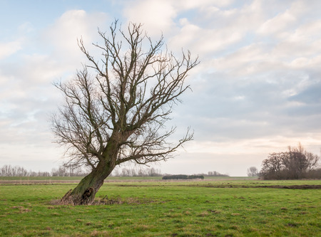 aslant: Old crooked tree in a Dutch nature reserve. Stock Photo