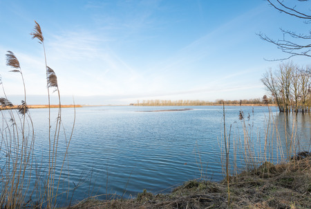 Swaying reeds on a beautiful winter day with a blue sky. photo