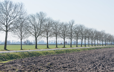 Dutch polder landscape with a plowed farm field and a row of bare trees. photo