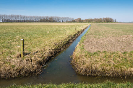 Dutch polder landscape with grassland and a field sown immediately after the winter season and separated from each other by a narrow ditch. photo