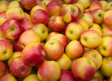 Closeup of a big heap yellow and red colored apples. photo