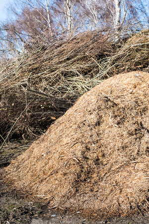 Closeup of piles of pruning waste in the park. Its springtime again. photo